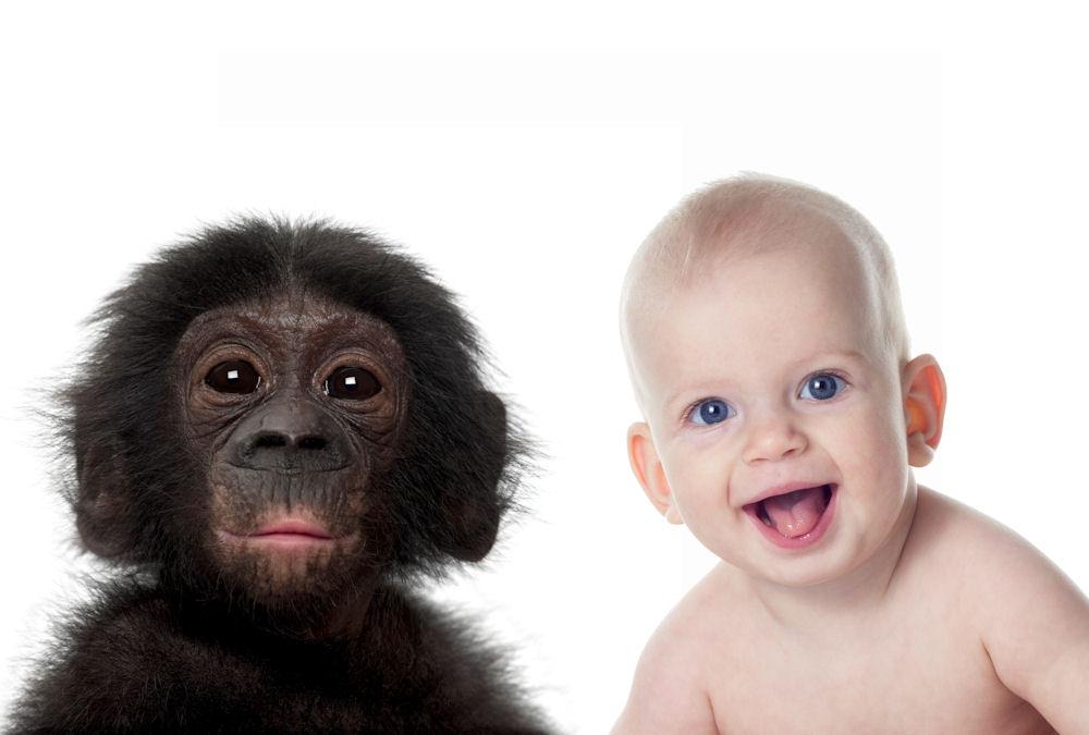 bonobohumanbabies