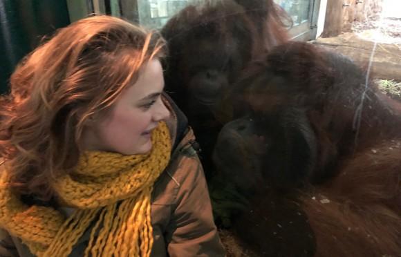 Is (g)apen aanstekelijk bij orang-oetans?